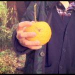 柚子をフレキシブルに使いたい。ユズ果汁は色々使える万能調味料【2017年柚子しごと】
